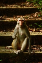 One-armed Macaque, Hong Kong