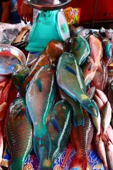 Reef fish, Malaysia