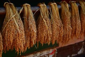 Sticky Rice, Zhaoxing
