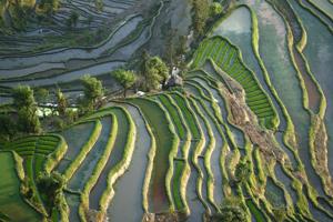 Yuanyang Rice Terraces, Yunnan