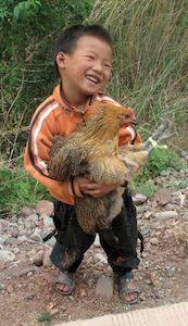 Boy with Chicken, Yunnan, China