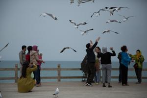 Bird Island, Qinghai Lake
