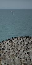Cormorant Rock, Qinghai Lake