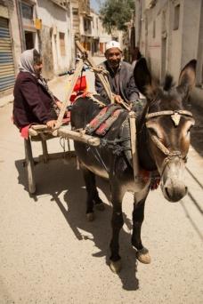 Donkey, Yarkand