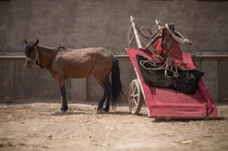 Horse and Cart, Kashgar Livestock Market