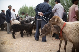 Fat-Bottomed Sheep, Shufu Sunday Market