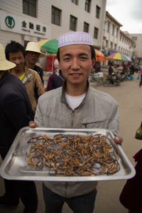 Caterpillar Fungus For Sale, Hezuo © Jo James