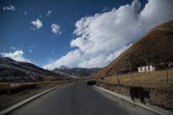 Road yaks, Serqu