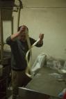 Noodle action, Qumarleg