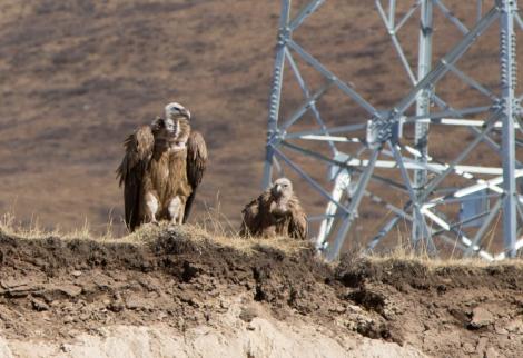 Vultures + Pylon © Jo James