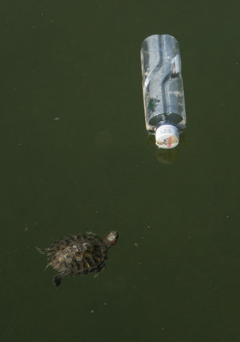 Turtle vs. Bottle, Shanwei © Jo James