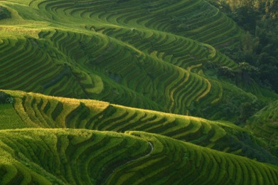 Rippled fields, Longji © Jo James