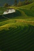 Harvest halfway, Longji © Jo James