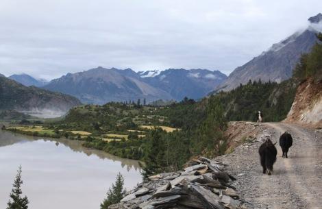 Road near Rawok, Tibet © Jo James