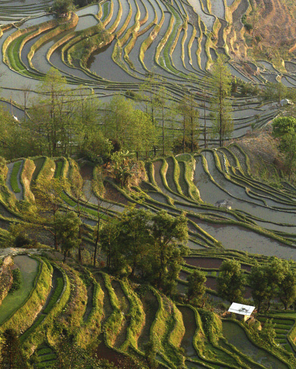 Yuanyang Rice Terraces, Yunnan