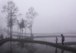 Misty day Yuanyang © Jo James