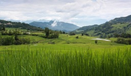 Mid-summer rice terraces, Yuanyang © Jo James