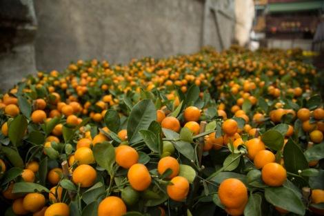 Orangey fields forever © Jo James