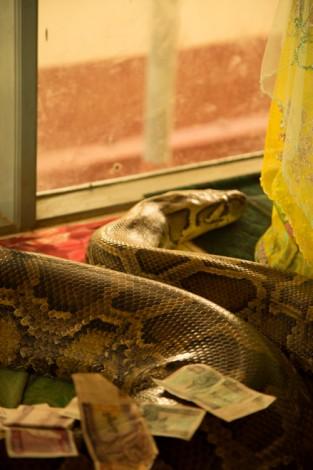 Snake, Bago Snake Monastery