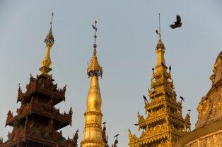 Bird and hti, Yangon