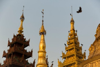 Bird and hti, Yangon