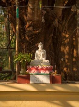 Buddha and peepul tree