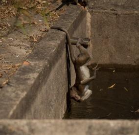 Monkey, Mount Zwegabin