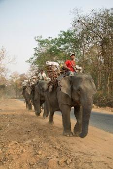 Elephants at work, Katha