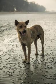Guesthouse dog © Jo James