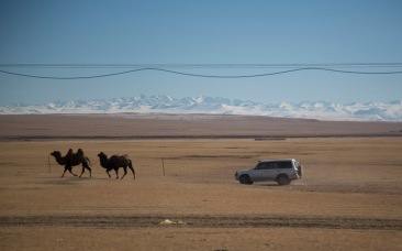 Camels and 4WD