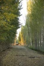 Country road, near Ghulja