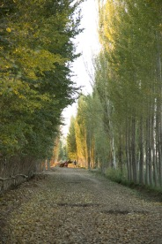 Country road, near Ghulja