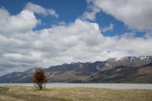 Tree. © Jo James