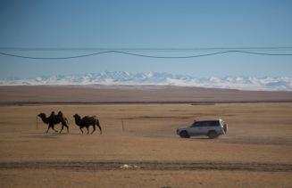 Camel + Jeep