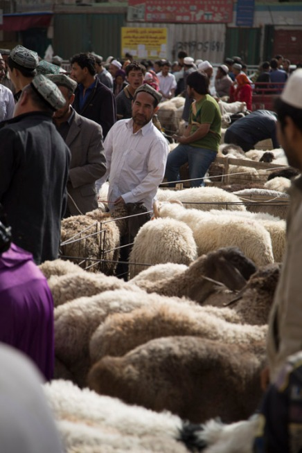 Sheep market madness ahead of Xinjiang's Korban festival