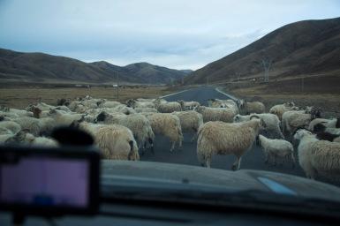 Lamb jam outside Shiqu