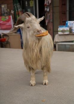 Breakfast on the run, Xiahe