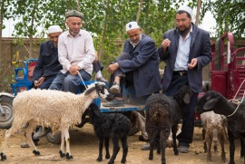Talking sheep in Shuhe, Xinjiang