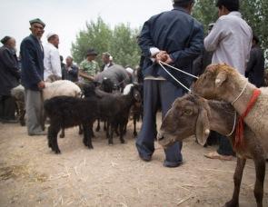 Shuhe Sunday market, Xinjiang