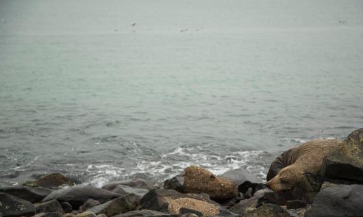 Seal, Otago Peninsula