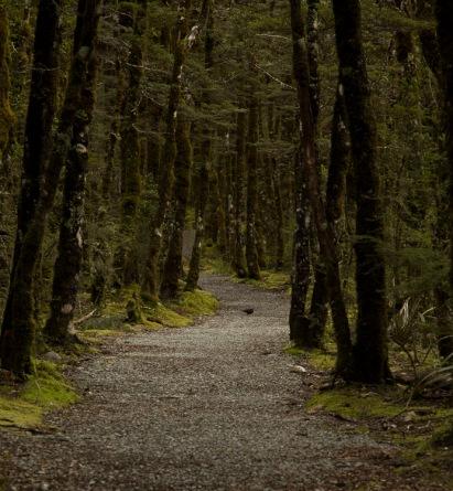 Footpath, Arthur's Pass