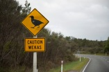 Only in NZ
