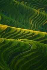 Rice Terraces, Guangxi
