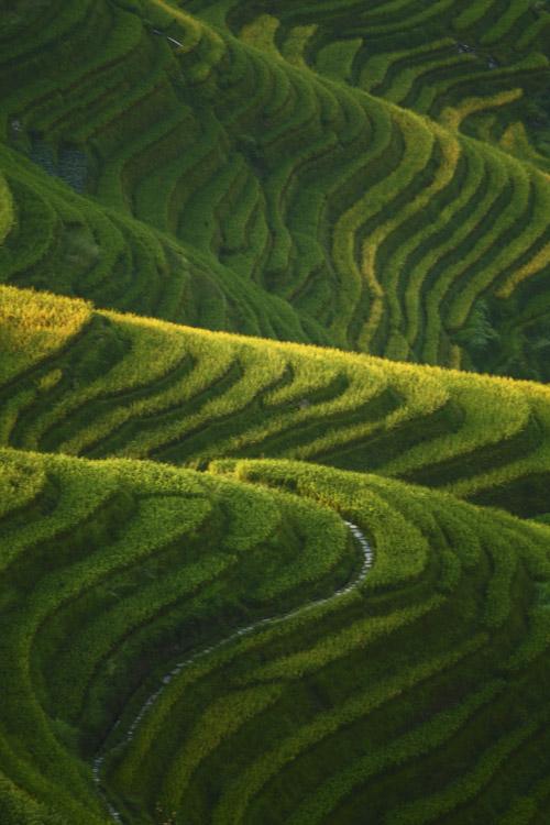 Rice Terraces, Guangxi