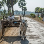 Cart and Oxen