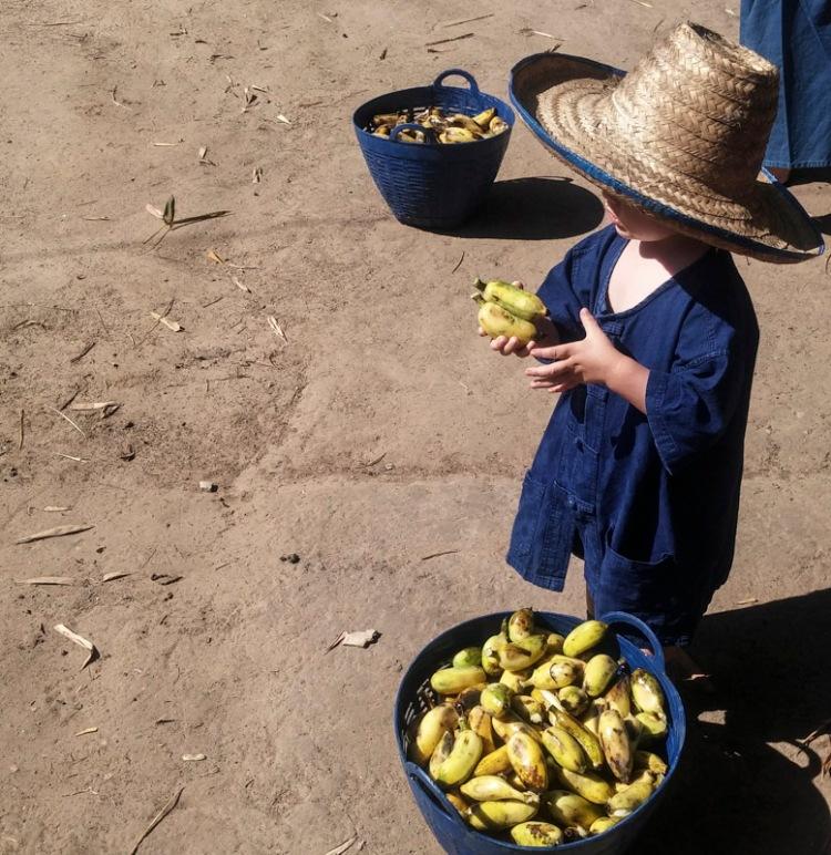 Little T goes bananas